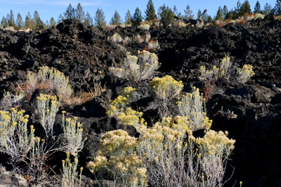 Love the sagebrush mixed in with the lava!