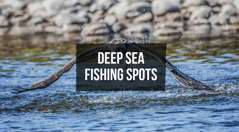 Deep-Sea-Fishing-Spots