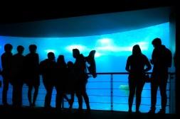 oceanario de lisboa lisbon portugal