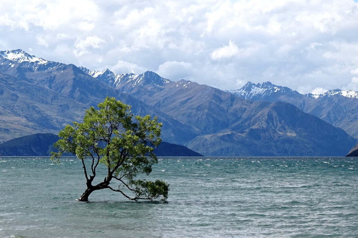 That Wanaka Tree, Wanaka, New Zealand - spinthewindrose.com
