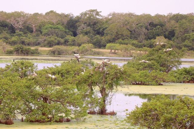 Kumana National Park with EcoWave - spinthewindrose.com
