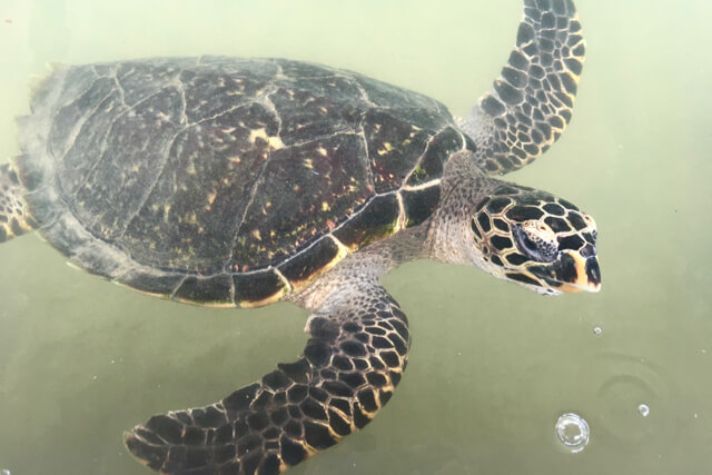 Sea Turtle Hatchery, Sri Lanka - spinthewindrose.com