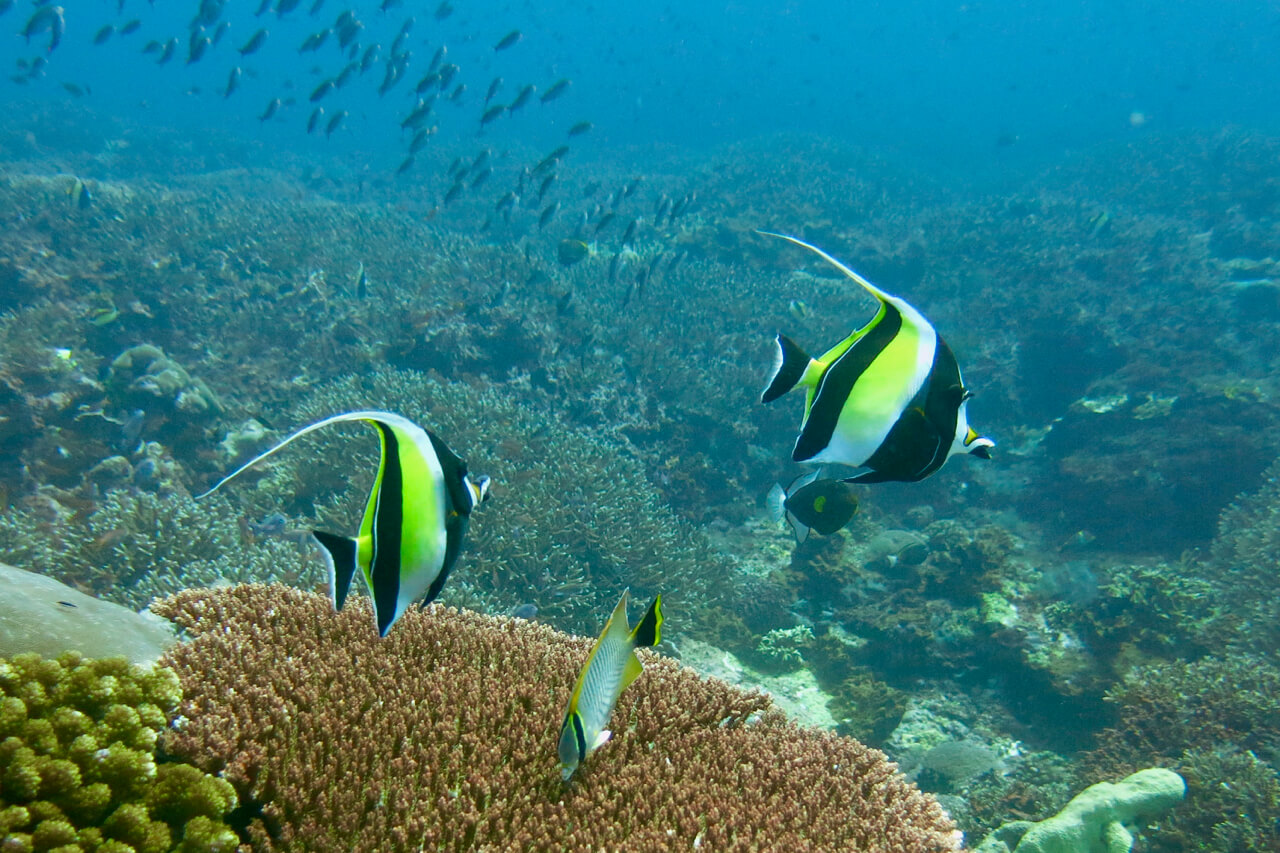 Scuba Diving in Bali and the Gili Islands - spinthewindrose.com