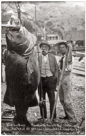 Huge Bass