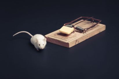 A mouse near a mousetrap.