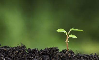 A green plant sprouting from the earth. God promises to send a Sprout or righteousness.
