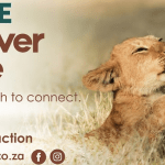 spirited_mama_rhino_lion_park_cubs_petting_interaction_no_touch_environment_family_activities_what_to_do_in_joburg