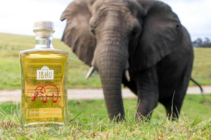 elephant dung gin ibhu indiovu
