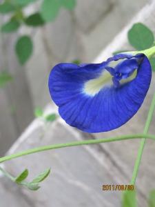 ashram-flowers-225