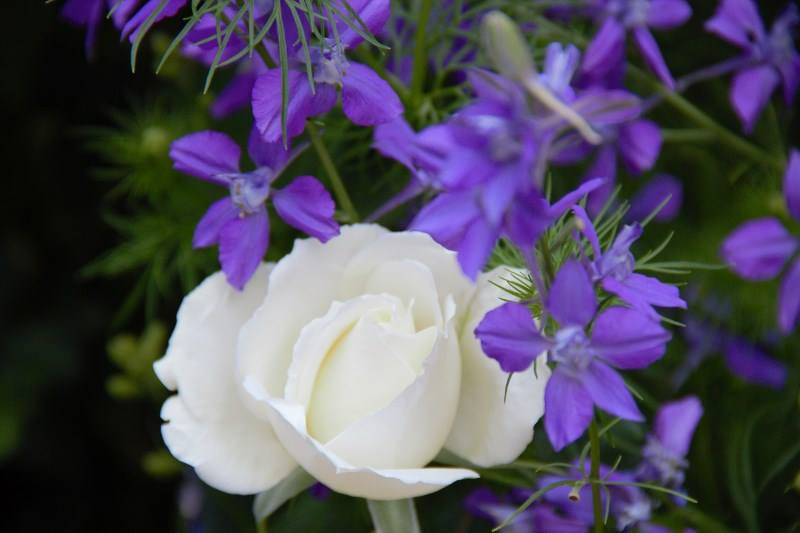 SL whie purple photo
