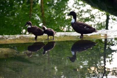 Congress Park, Saratoga Springs New York