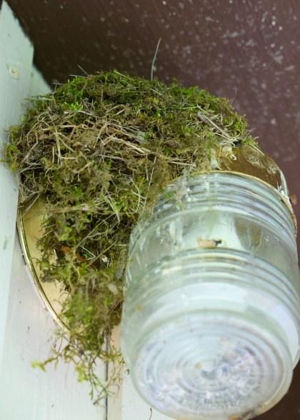 Birds will build their nest anywhere