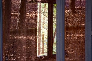 Loved discovering the reflection of the forest in the window