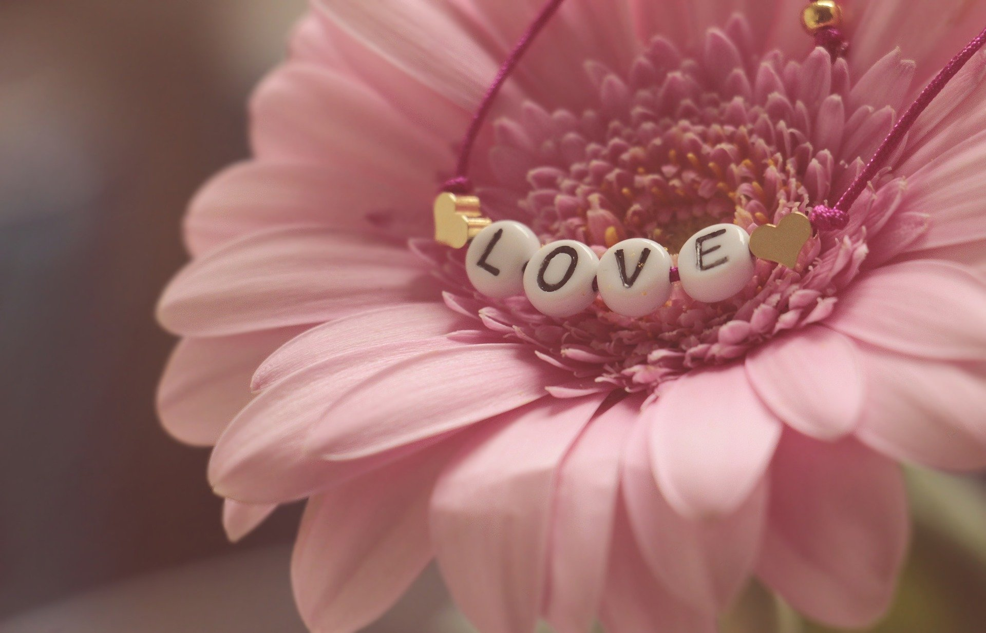 a pink flower with a love bracelet