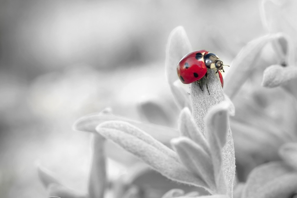 what does it mean to dream of a ladybird?