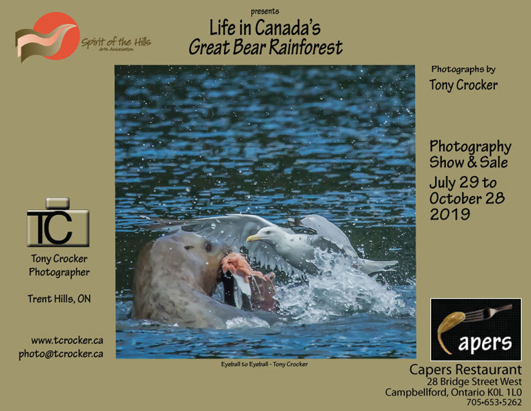 Spirit of the Hills Arts Association presents, Life in Canada's Great Bear Rainforest with photographs by Tony Crocker Photography Show & Sale July 29 to October 28, 2019