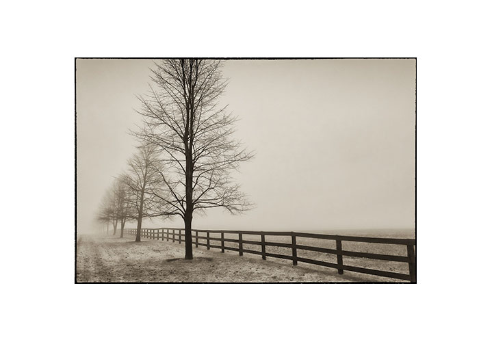Northumberland Fog by Brian Tyson