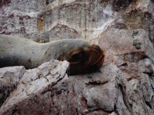 Deep relaxation on Peru's Mini Galapagos