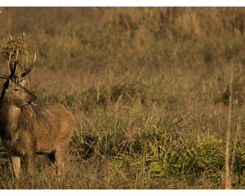 Kanha National Park – Inheritance of Bhoorsingh