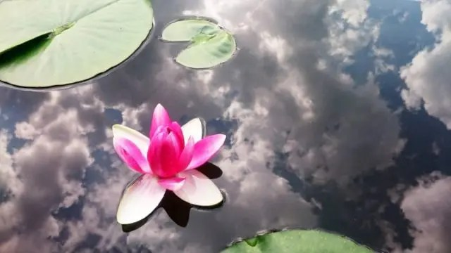 カルマの法則 蓮の花 神秘