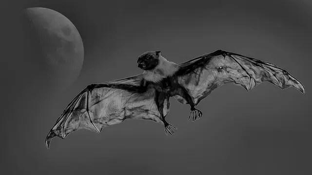 飛んでいる蝙蝠 コウモリ