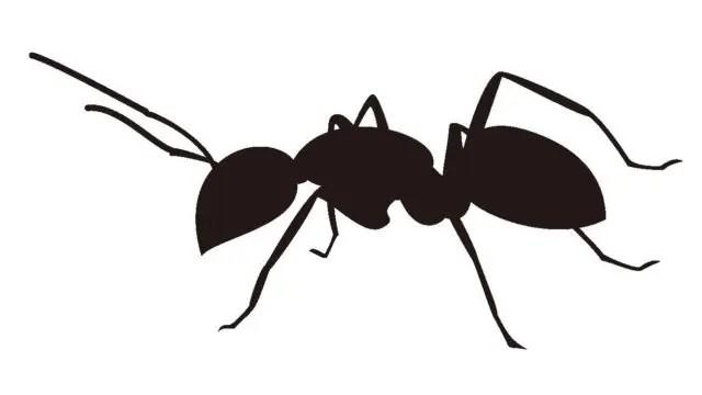 蟻 シルエット