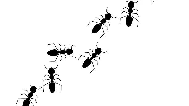 蟻の行列 イラスト