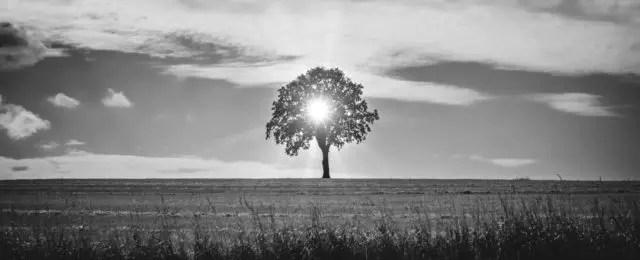 光 草原 地球 木