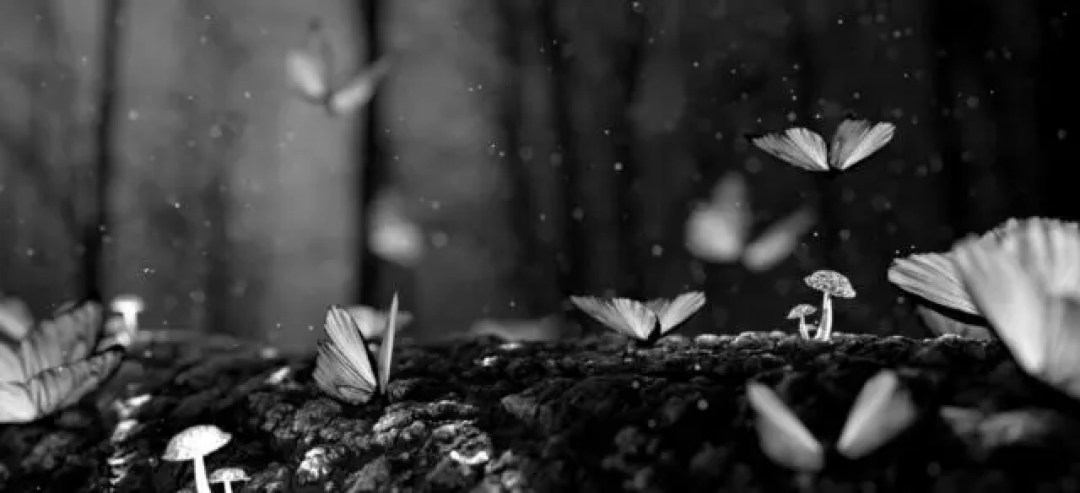たくさんの蝶々が元気よく飛ぶ夢のスピリチュアルメッセージ 「今後も人材に恵まれます」