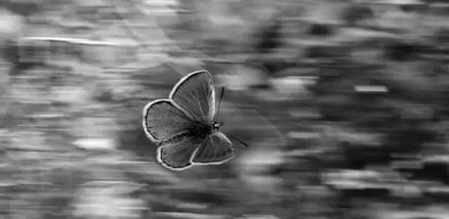 蝶々は時間、空間を超えたメッセージを運ぶことが出来ます