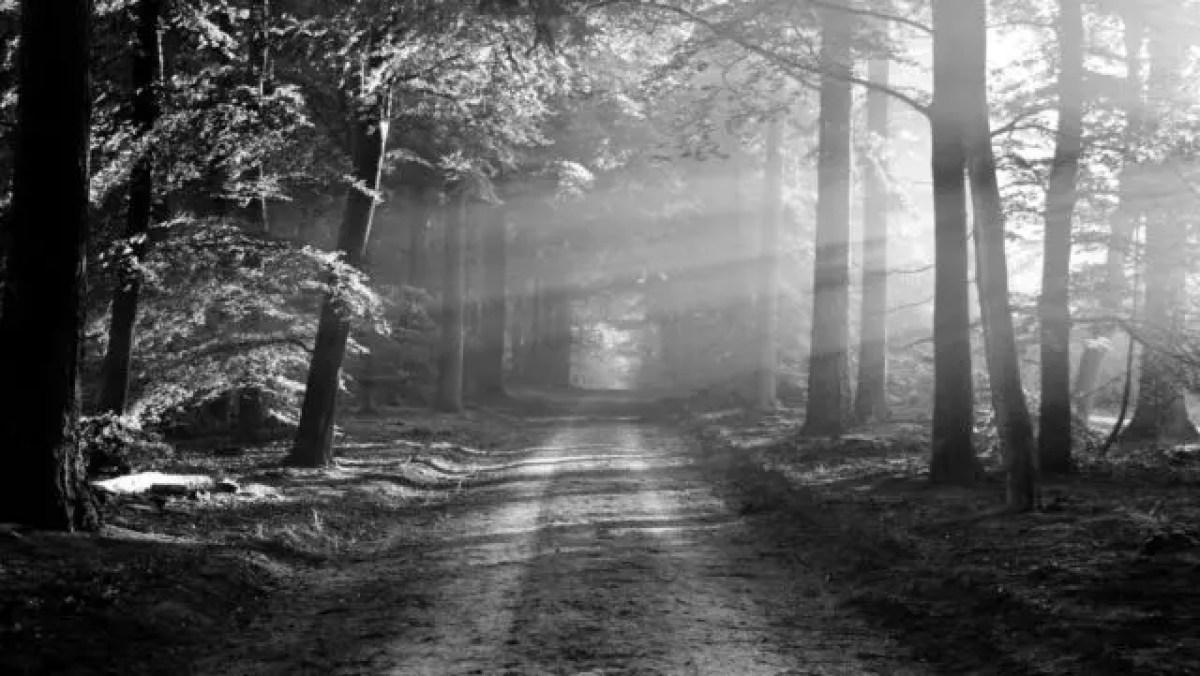 森林 あぜ道 木漏れ日 光