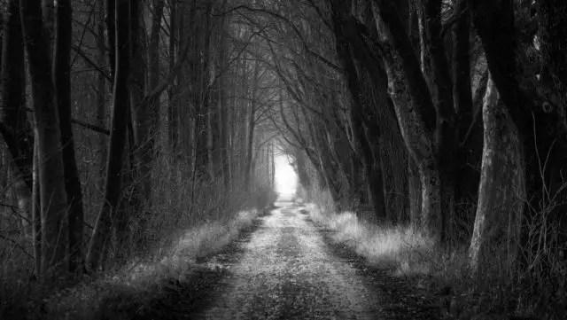 森林の道 木漏れ日 光 未来 希望