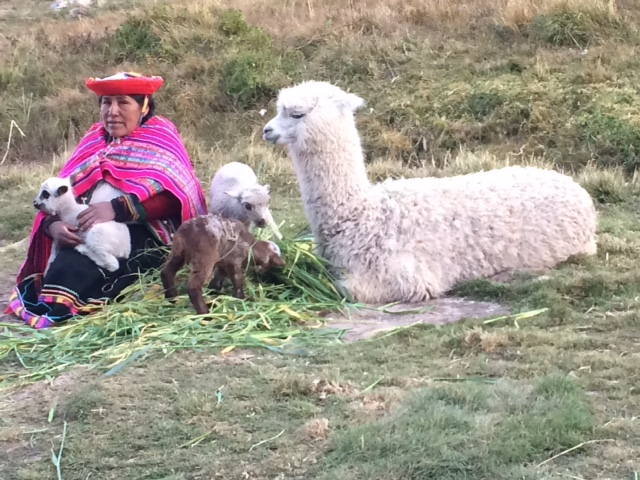 woman with lama