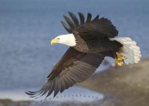 birds-of-north-america_t4868