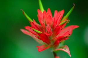2005-7-Red-Desert-Paintbrush2