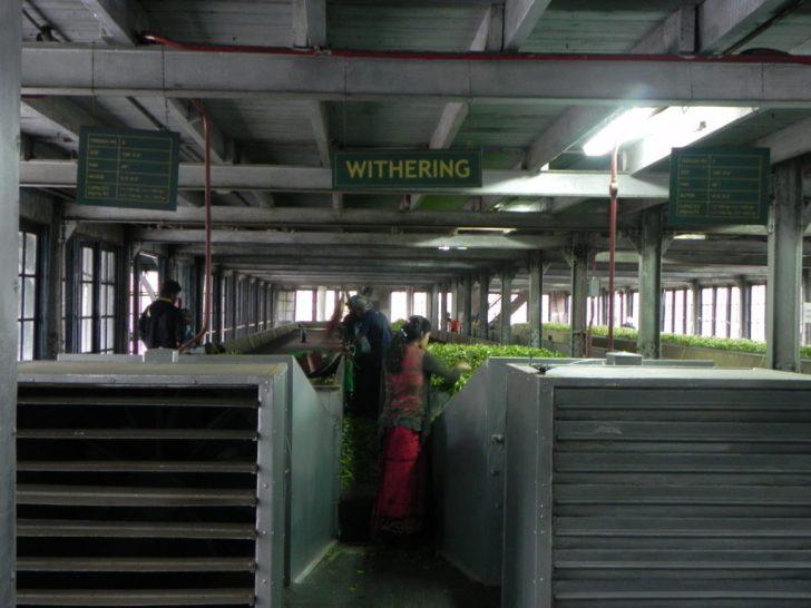 茶畑工場の内部