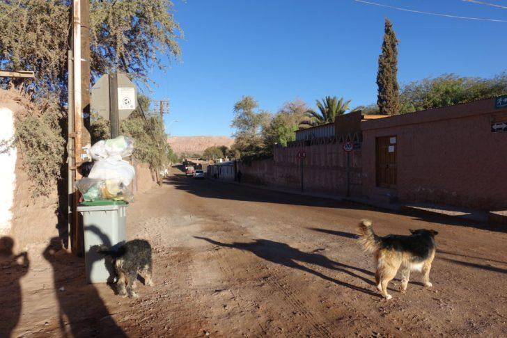 野良犬が朝の散歩