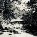 ダラットの山道