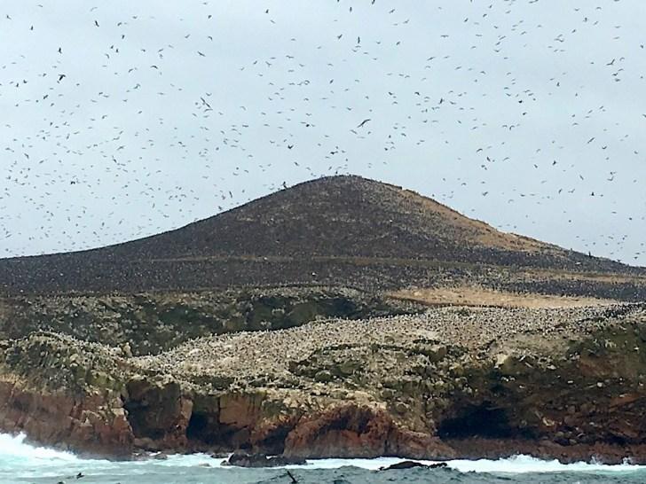 バジェスタス島住む大量の鳥