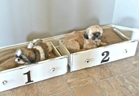 Χρησιμοποιήστε παλιά συρτάρια για να βάλετε τα σκυλάκια σς μέσα
