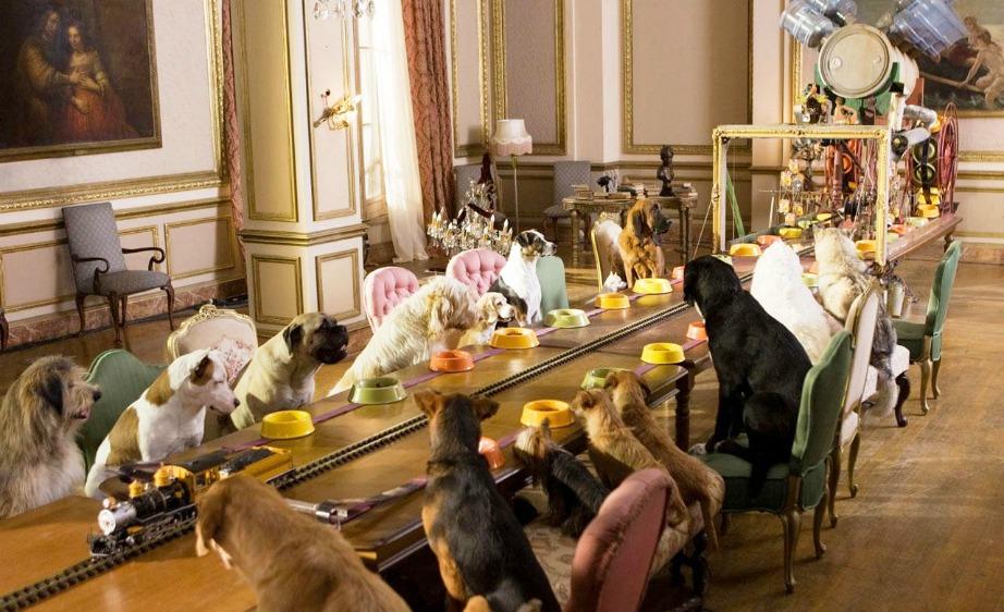 Αναλόγως με τα χρήματα που θέλετε να διαθέσετε, μπορείτε να βρείτε ξενώνες που θα προσφέρουν όλες τις ανέσεις στο ζωάκι σας