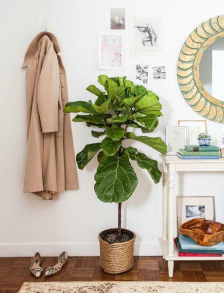 Δίπλα στην εξώπορτα μπορείτε αν τοποθετήσετε ένα ράφι για τα κλειδιά και τα κινητά, ένα όμορφο φυτό και μερικά γατζάκια για να κρεμάτε τα παλτό σας.