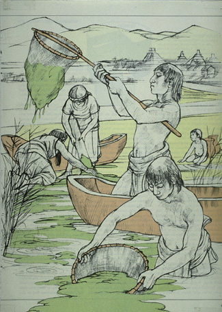 Image of Aztecs harvesting Spirulina for Food