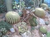 Keep up the good work, tropical cactus gardeners!