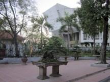 bonsai near Ho Chi Minh Museum
