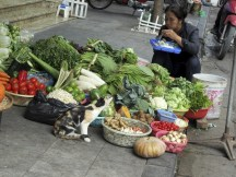 vegetable stall (avec un chat)