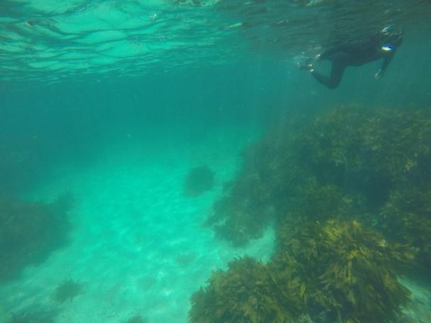 Šnorchlování na Goat island
