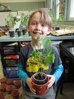 Lorenzo plant