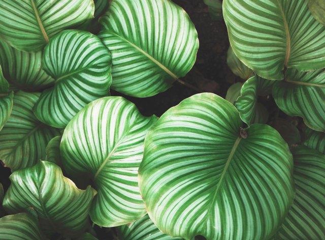 Imagen artículo | Ecocean | 06