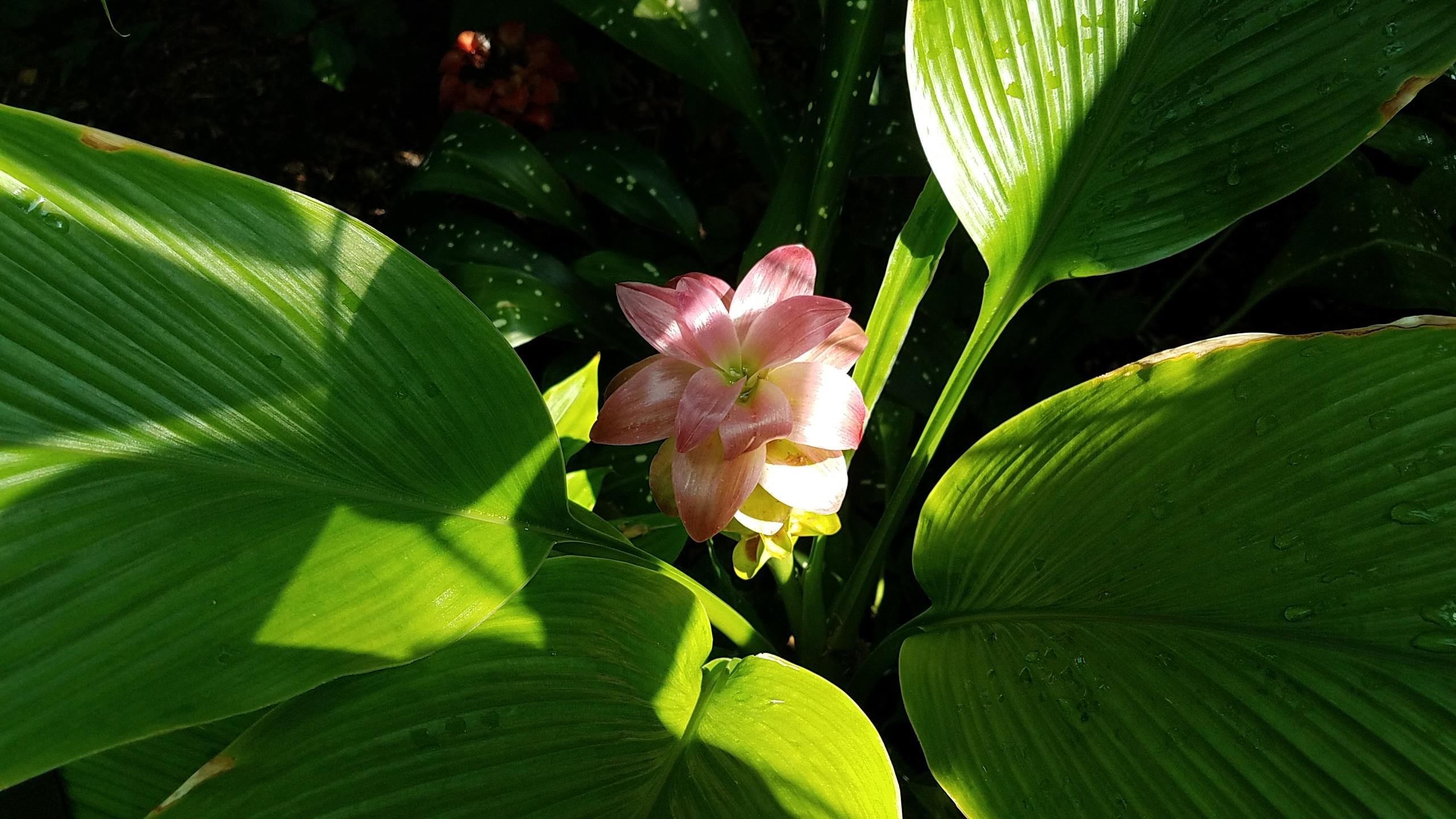 growing inside flowers